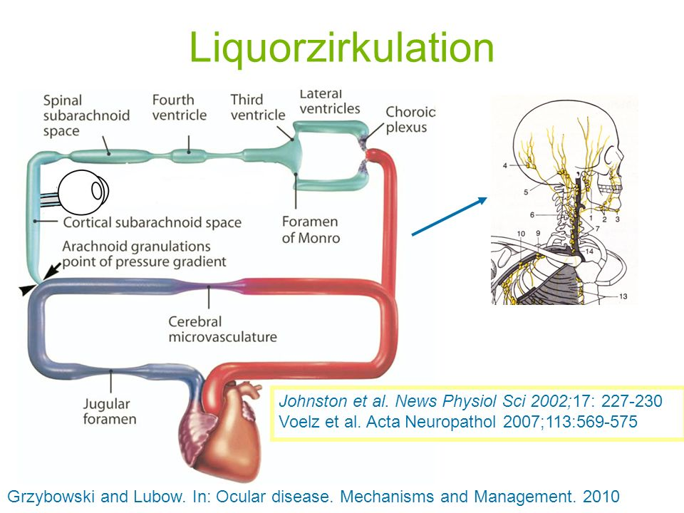 Liquorzirkulation Johnston et al. News Physiol Sci 2002;17: 227-230 Voelz et al. Acta Neuropathol 2007;113:569-575.