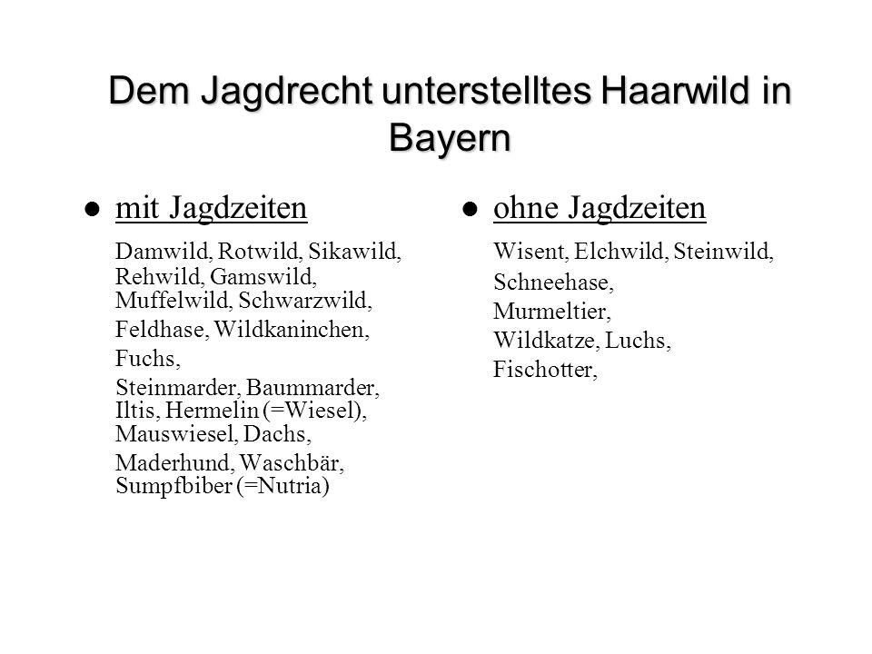 Dem Jagdrecht unterstelltes Haarwild in Bayern