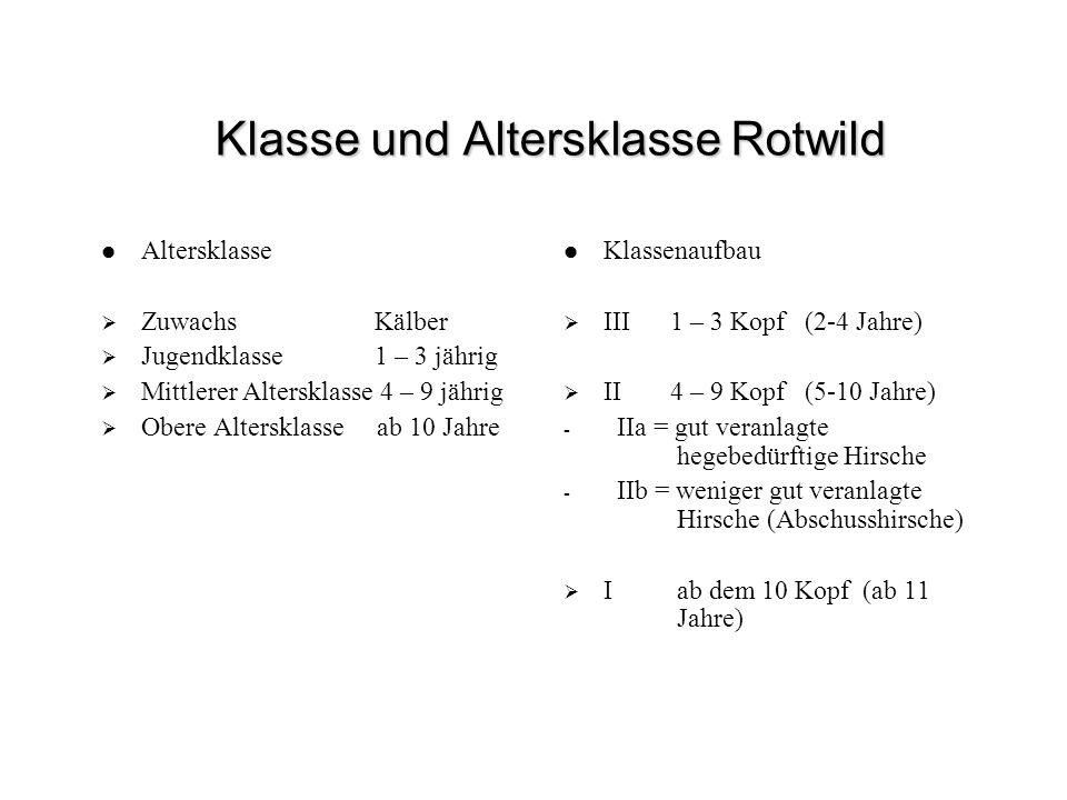 Klasse und Altersklasse Rotwild