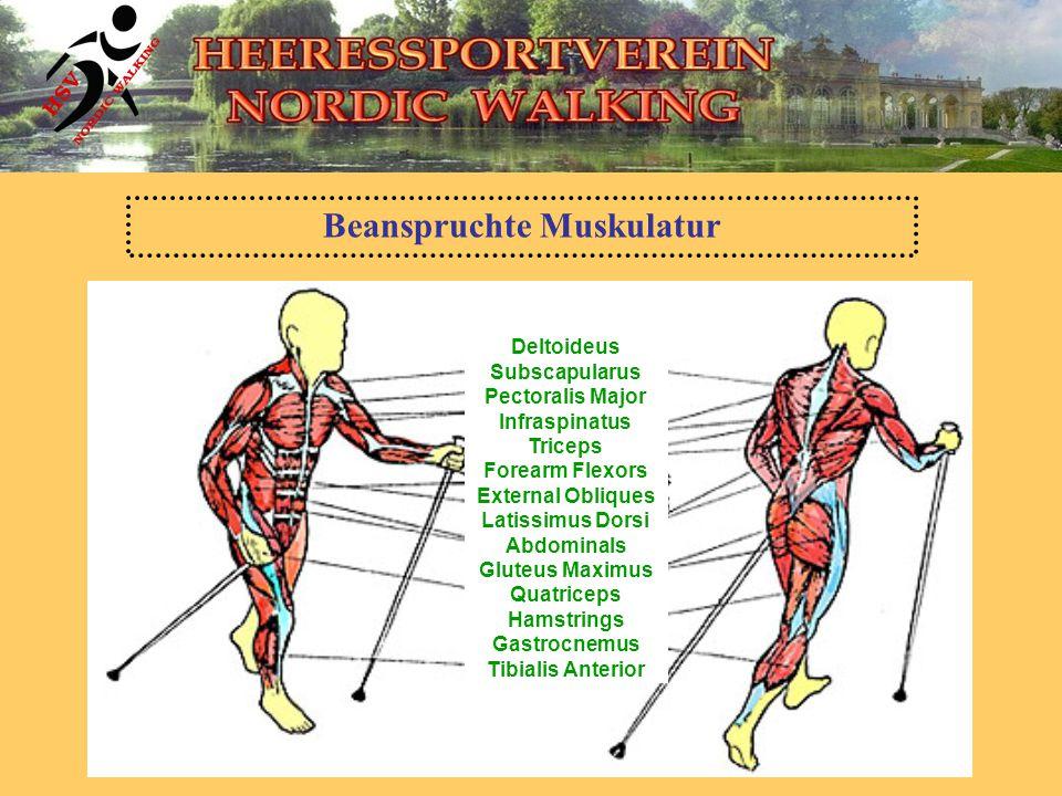 Beanspruchte Muskulatur