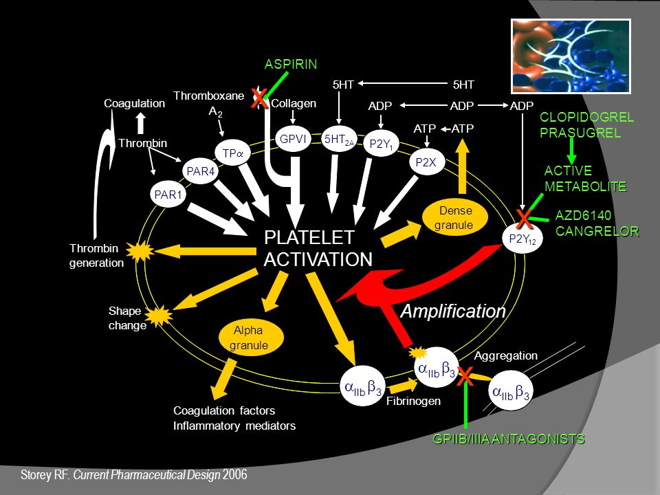 x x x PLATELET ACTIVATION Amplification a b a b a b ASPIRIN
