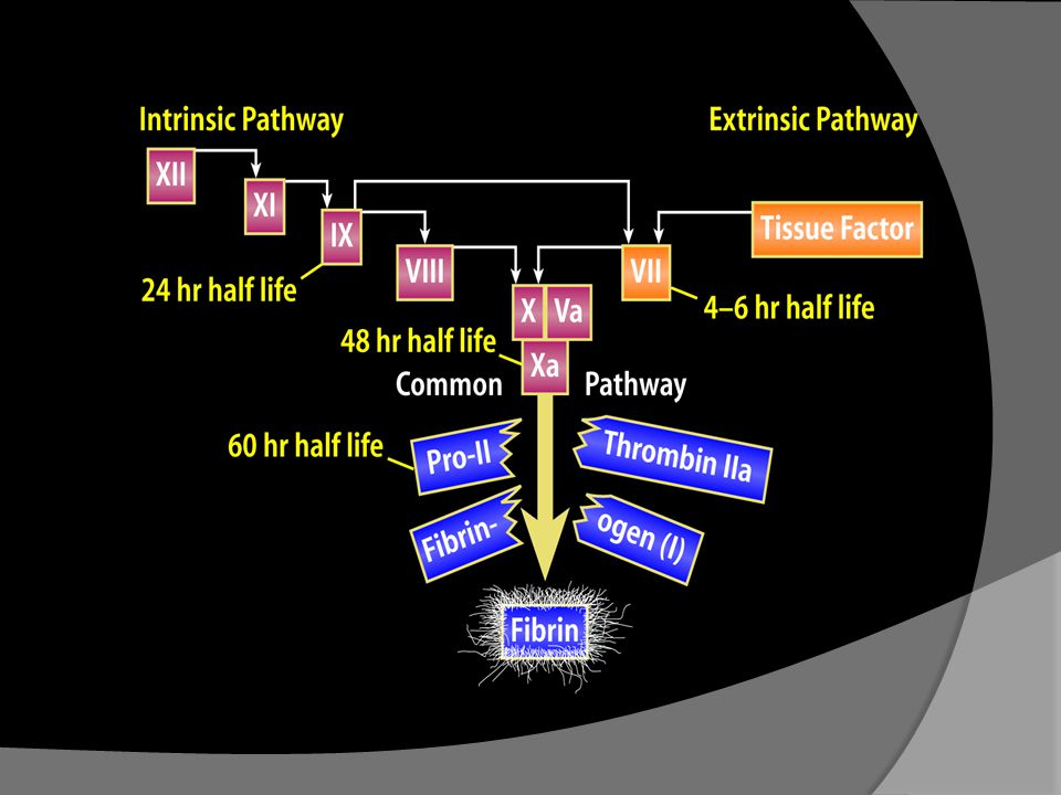 The blood coagulation process can be activated by one of two pathways, the tissue Factor pathway (formerly known as the extrinsic pathway) and the contact activation pathway (known as the intrinsic pathway).