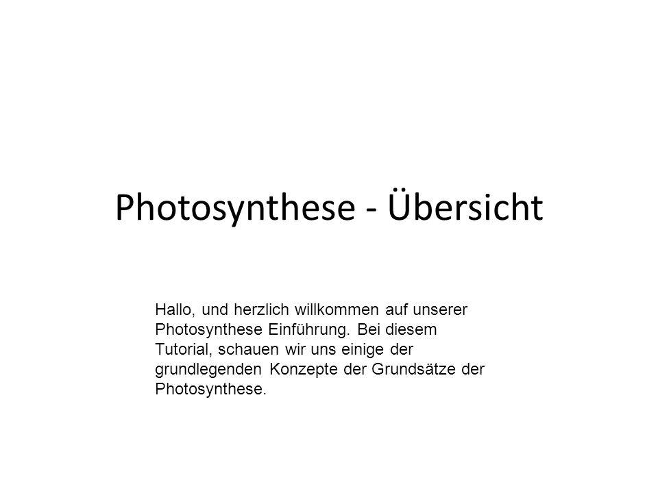 Photosynthese - Übersicht