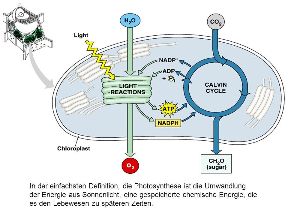 In der einfachsten Definition, die Photosynthese ist die Umwandlung der Energie aus Sonnenlicht, eine gespeicherte chemische Energie, die es den Lebewesen zu späteren Zeiten.