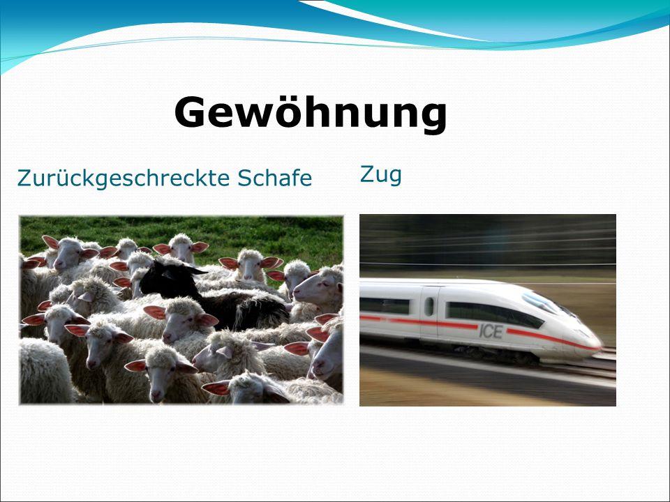 Gewöhnung Zurückgeschreckte Schafe Zug