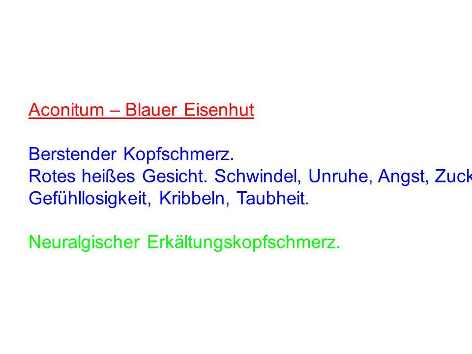 Aconitum – Blauer Eisenhut