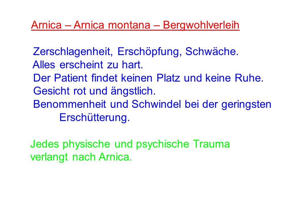 Arnica – Arnica montana – Bergwohlverleih