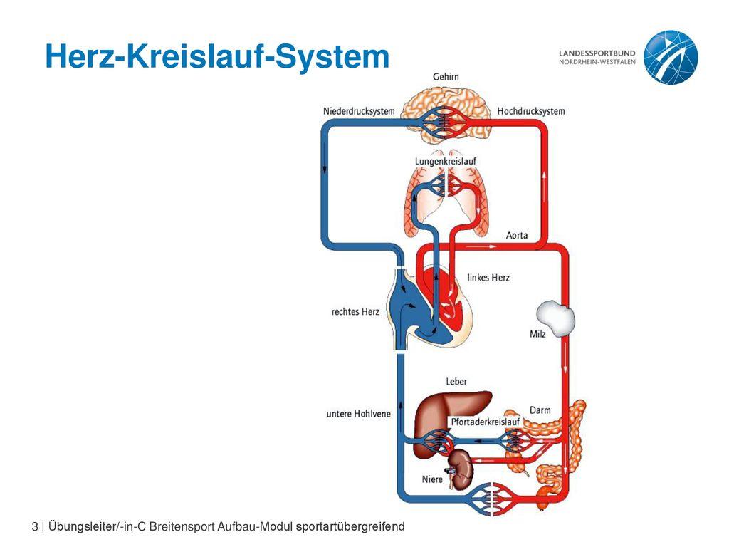 Das Herz Kreislauf System    ppt herunterladen