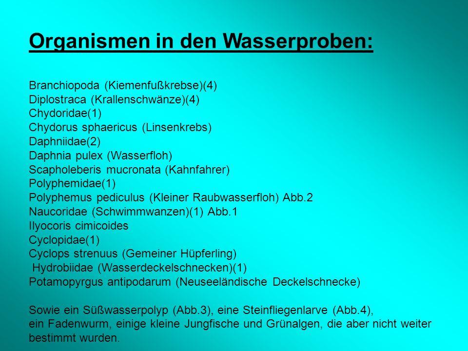 Organismen in den Wasserproben: