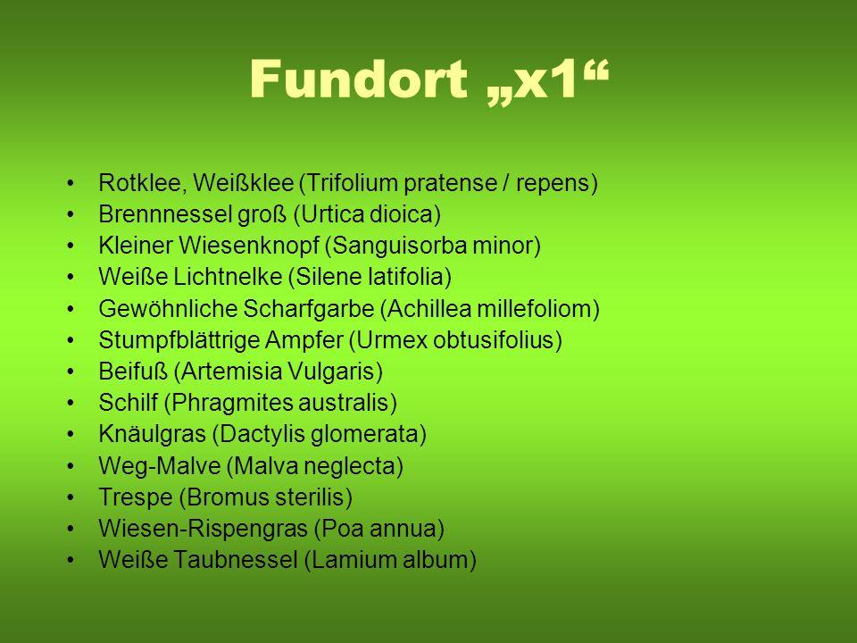 """Fundort """"x1 Rotklee, Weißklee (Trifolium pratense / repens)"""