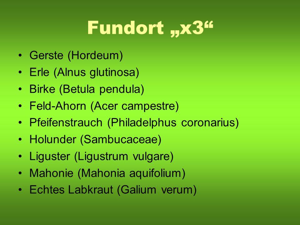 "Fundort ""x3 Gerste (Hordeum) Erle (Alnus glutinosa)"