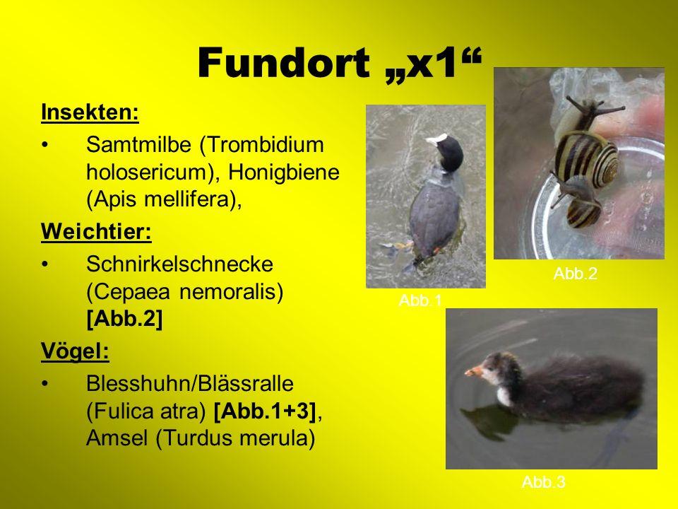 "Fundort ""x1 Insekten: Samtmilbe (Trombidium holosericum), Honigbiene (Apis mellifera), Weichtier:"