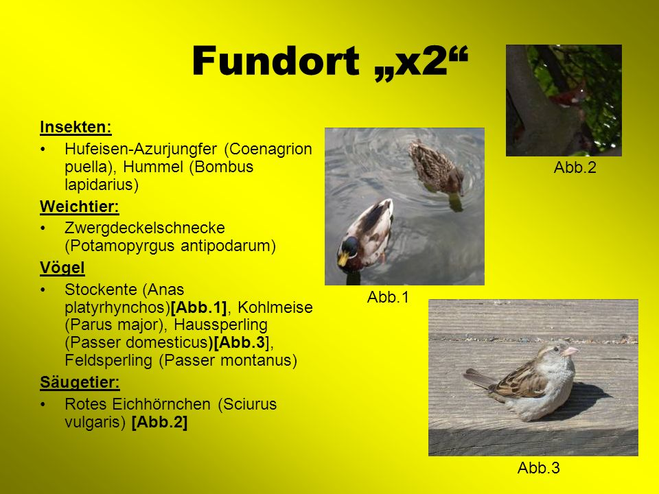 "Fundort ""x2 Insekten: Hufeisen-Azurjungfer (Coenagrion puella), Hummel (Bombus lapidarius) Weichtier:"