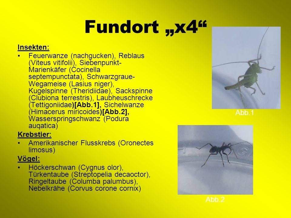 """Fundort """"x4 Insekten:"""