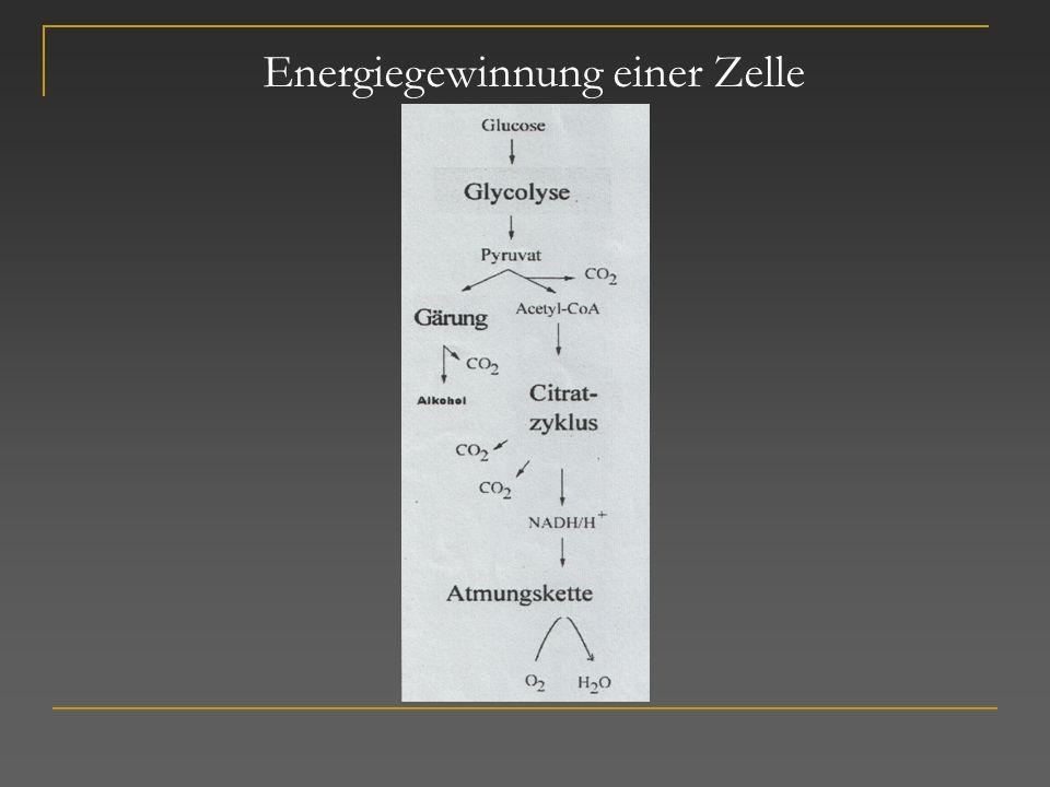 Energiegewinnung einer Zelle