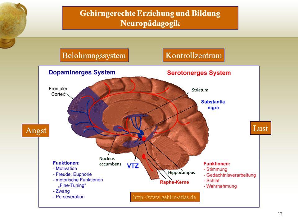 Gehirngerechte Erziehung und Bildung