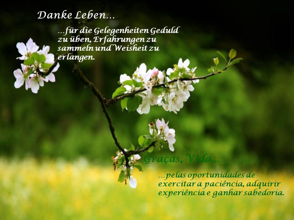 Danke Leben… Graças, Vida...