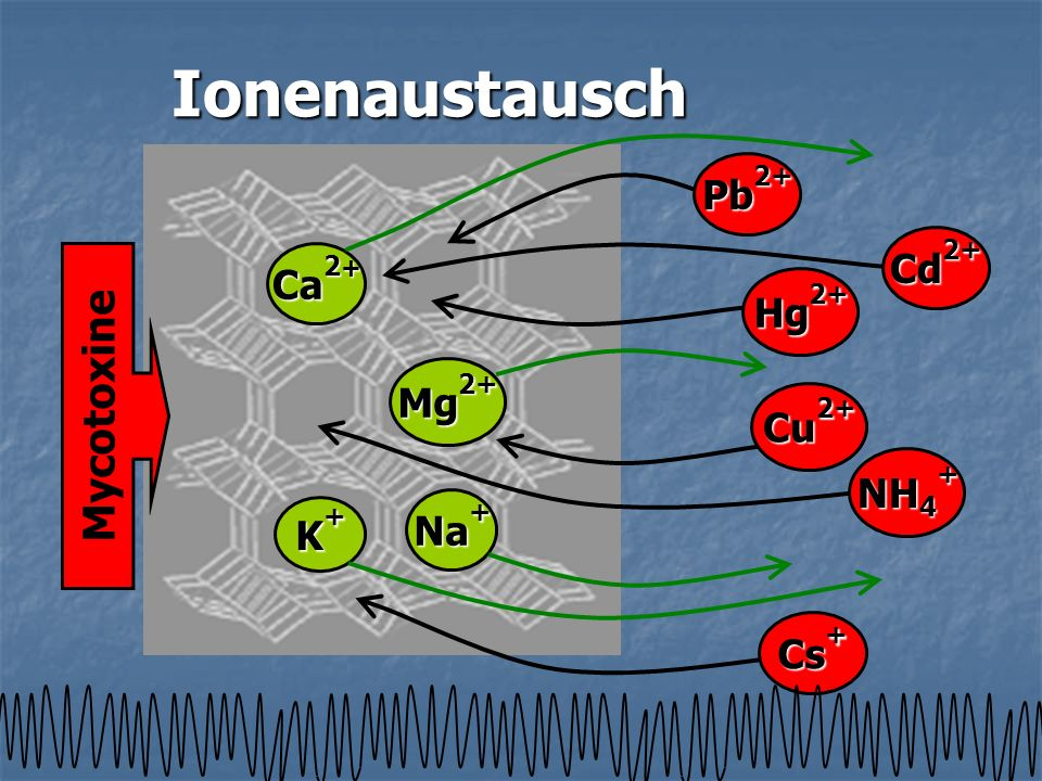 Ionenaustausch Mycotoxine Pb2+ Cd2+ Ca2+ Hg2+ Mg2+ Cu2+ NH4+ Na+ K+