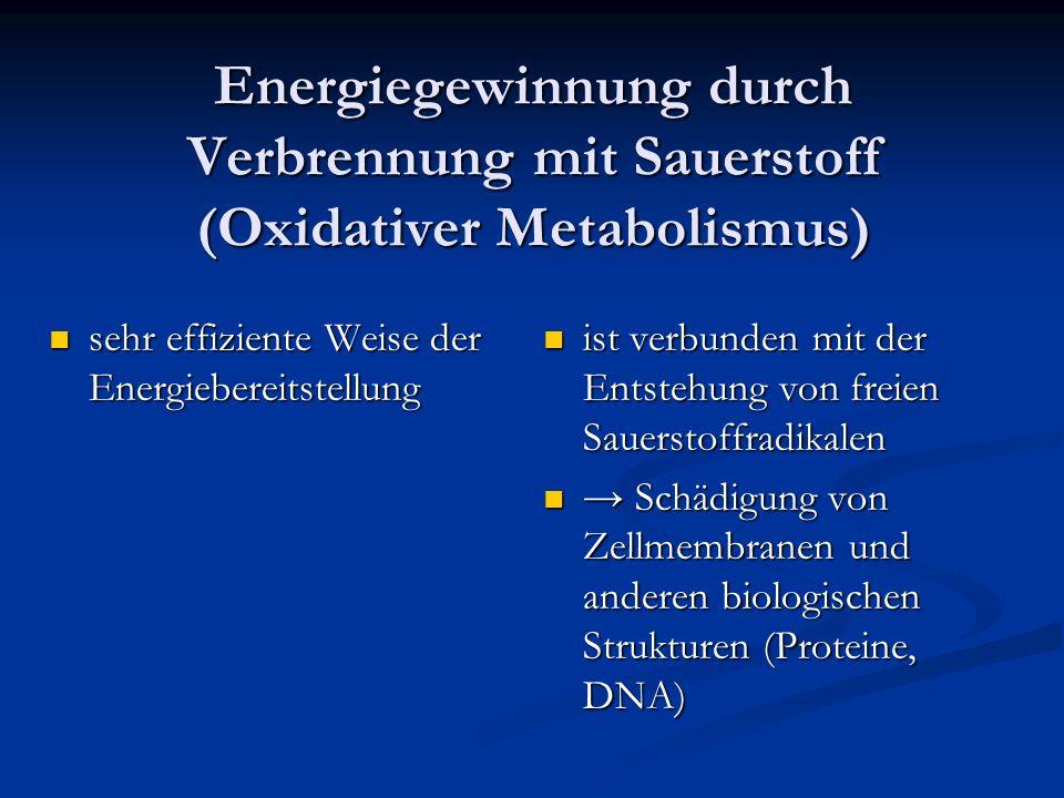 Energiegewinnung durch Verbrennung mit Sauerstoff (Oxidativer Metabolismus)