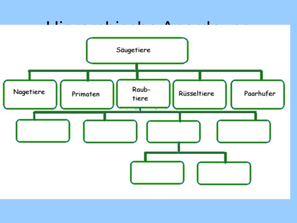 Hierarchische Anordnung