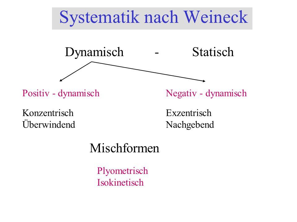 Systematik nach Weineck