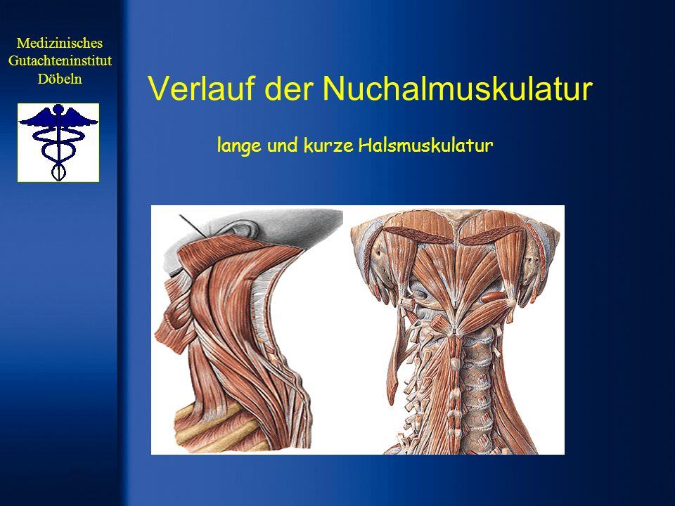 Verlauf der Nuchalmuskulatur