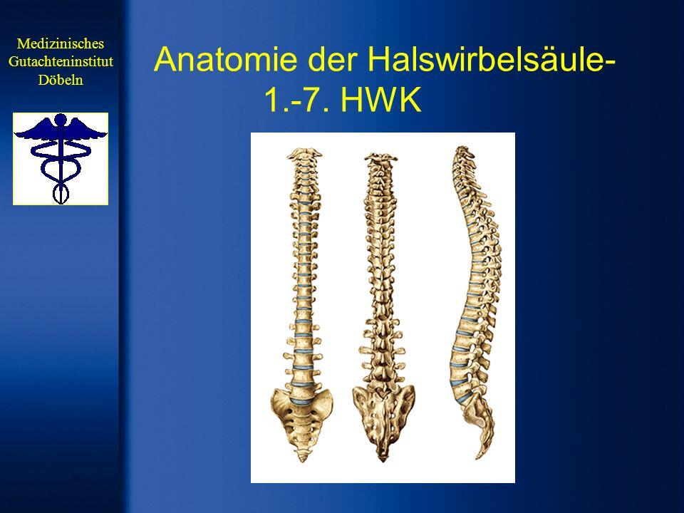 Anatomie der Halswirbelsäule-1.-7. HWK