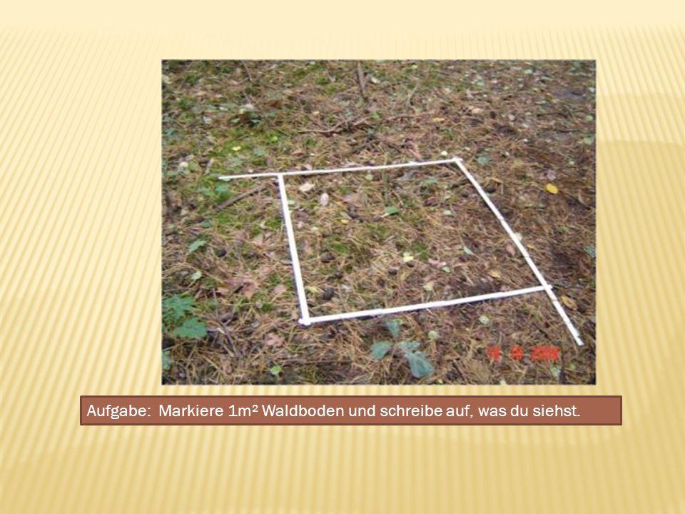 Aufgabe: Markiere 1m² Waldboden und schreibe auf, was du siehst.