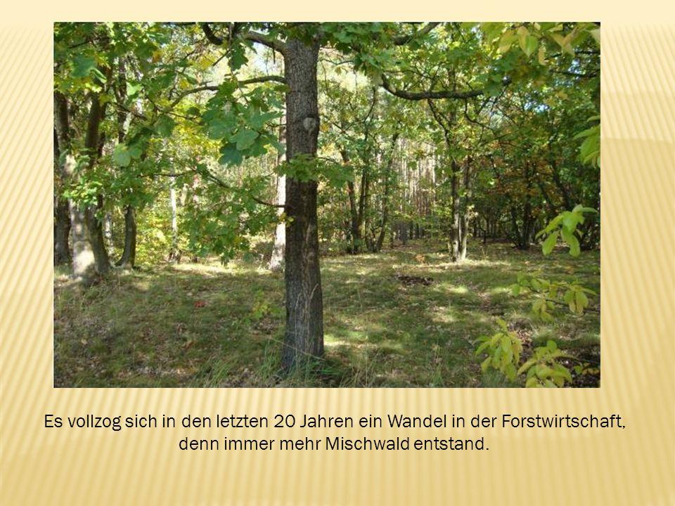 Es vollzog sich in den letzten 20 Jahren ein Wandel in der Forstwirtschaft, denn immer mehr Mischwald entstand.