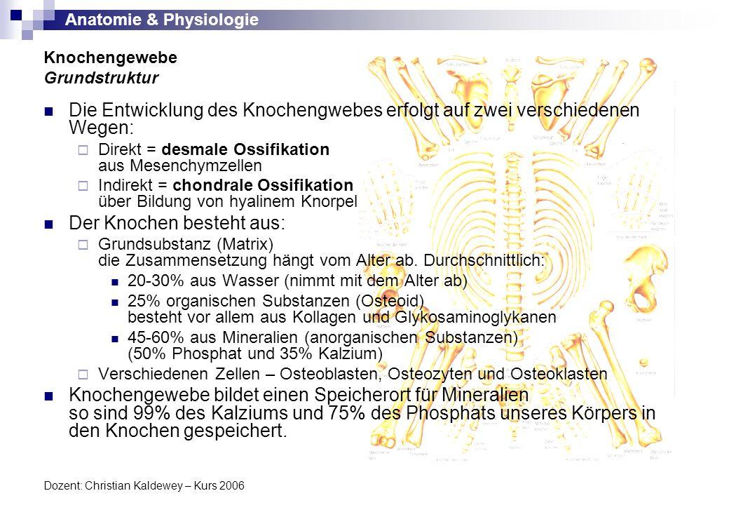 Knochengewebe Grundstruktur