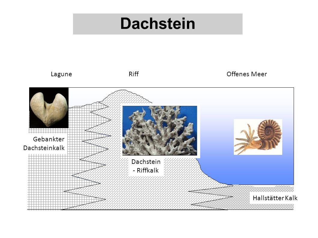 Dachstein Lagune Riff Offenes Meer Gebankter Dachsteinkalk