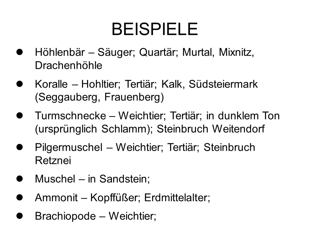 BEISPIELE Höhlenbär – Säuger; Quartär; Murtal, Mixnitz, Drachenhöhle