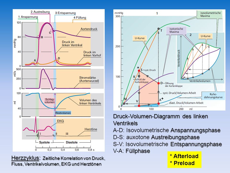 Druck-Volumen-Diagramm des linken Ventrikels