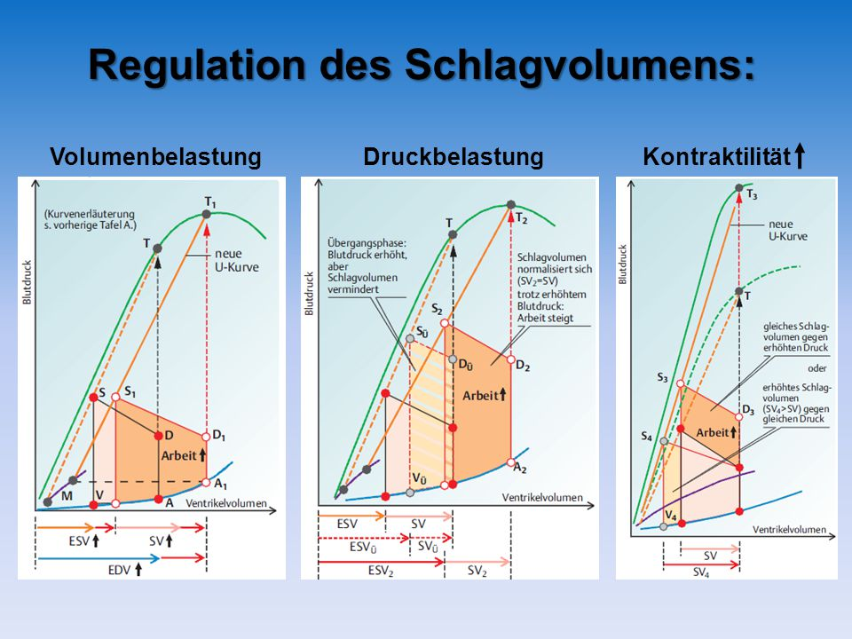 Regulation des Schlagvolumens: