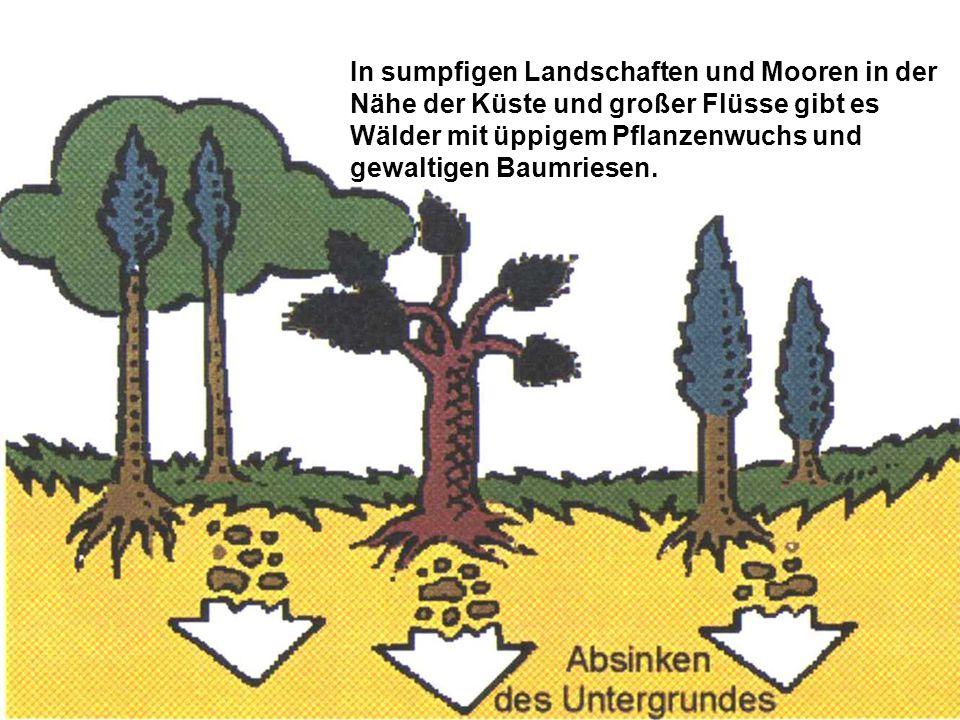 In sumpfigen Landschaften und Mooren in der Nähe der Küste und großer Flüsse gibt es Wälder mit üppigem Pflanzenwuchs und gewaltigen Baumriesen.
