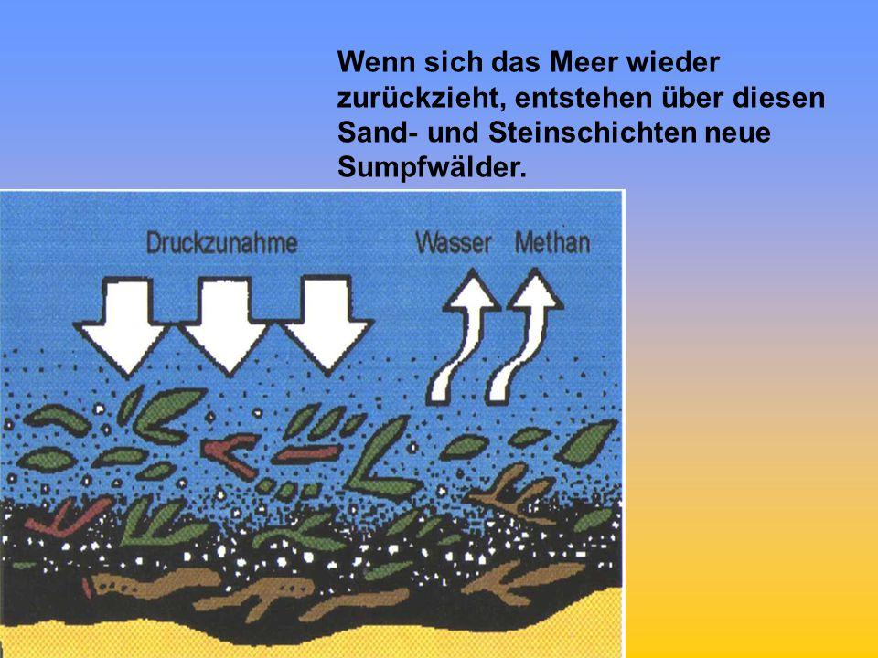 Wenn sich das Meer wieder zurückzieht, entstehen über diesen Sand- und Steinschichten neue Sumpfwälder.