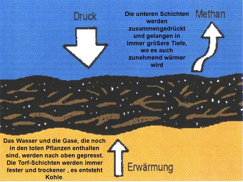Die unteren Schichten werden zusammengedrückt und gelangen in immer größere Tiefe, wo es auch zunehmend wärmer wird