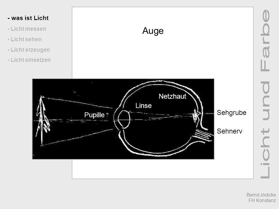 Auge Netzhaut Linse Sehgrube Pupille Sehnerv - was ist Licht