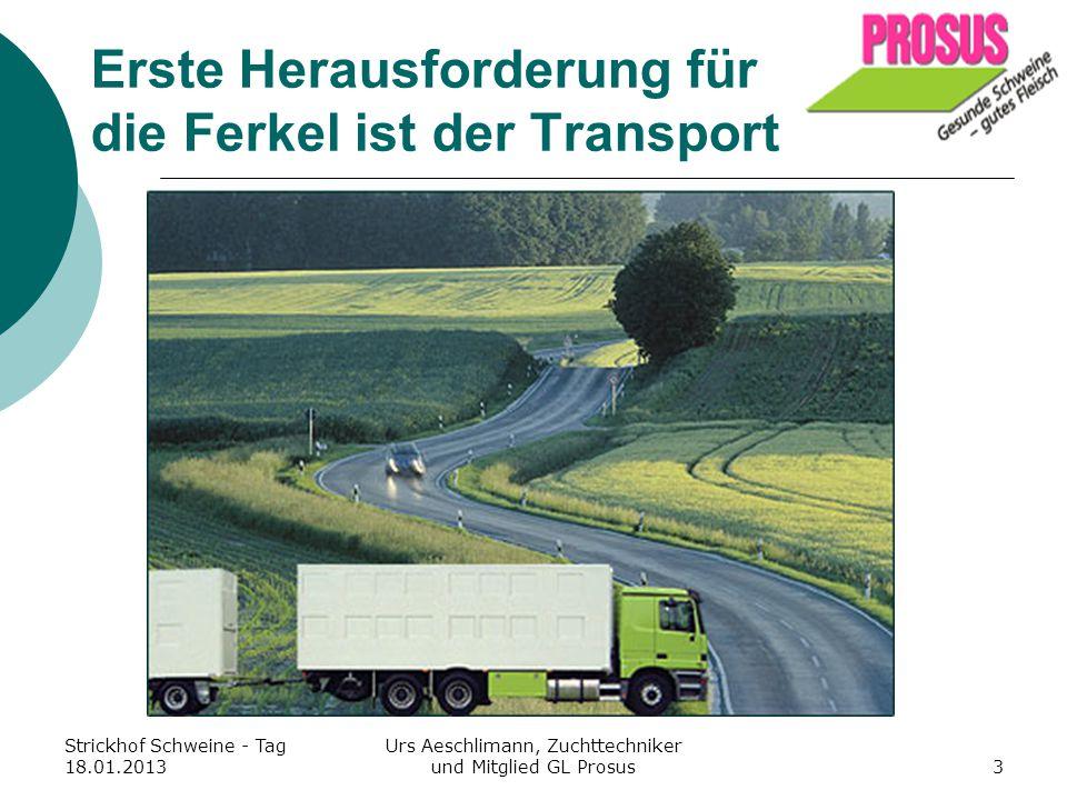 Erste Herausforderung für die Ferkel ist der Transport