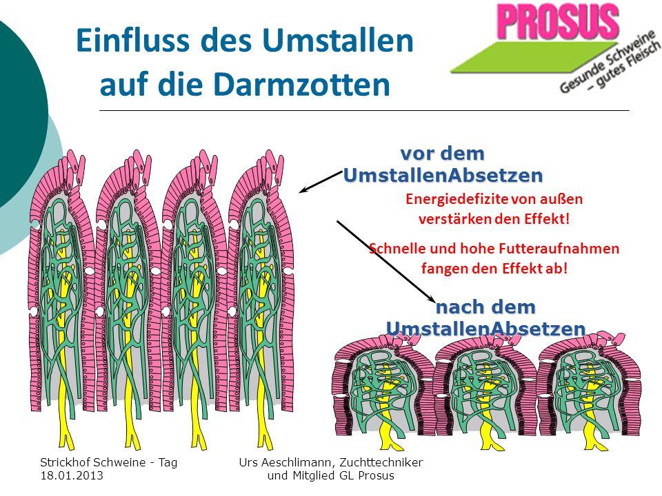Einfluss des Umstallen auf die Darmzotten