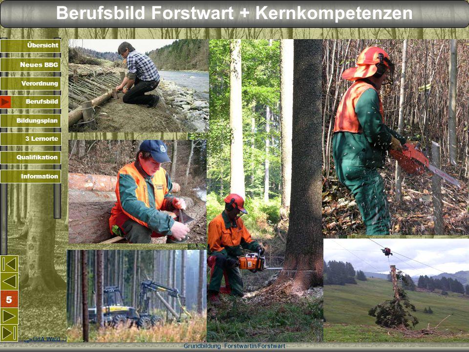 Berufsbild Forstwart + Kernkompetenzen