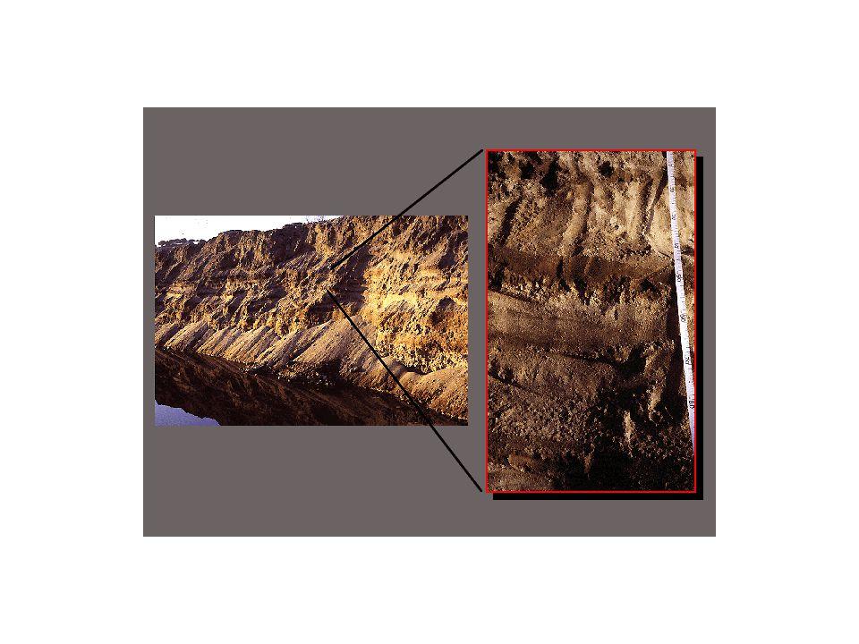 Dieses Auenbodenprofil zeigt, besonders in der Vergrösserung rechts, die Auswirkung periodischer Überflutung: dunkle Schichten (begrabene A-Horizonte) deuten auf überflutungsfreie Perioden, in denen wegen der Ansiedlung von Vegetation eine Akkumulation von organischer Substanz im damaligen Oberboden möglich war, hellere Schichten auf Überflutungsepisoden, bei denen neues Ausgangsmaterial abgelagert wurde, in dem sich dann ein neuer A-Horizont bilden konnte.