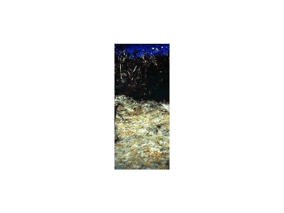 Der verrostete Go-Horizont eines Gleybodens; der typische Gr-Horizont folgt erst in grösserer Tiefe, wo permanent reduzierende Bedingungen herrschen.