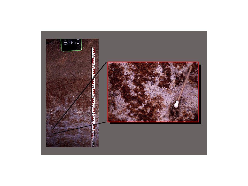 Detailansicht aus dem Sd-Horizont eines Stauwasserbodens