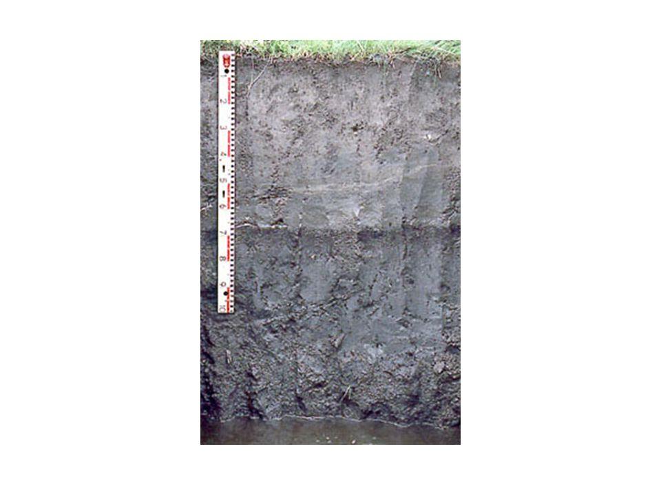 Ein Grundwasser-beeinflusster Boden