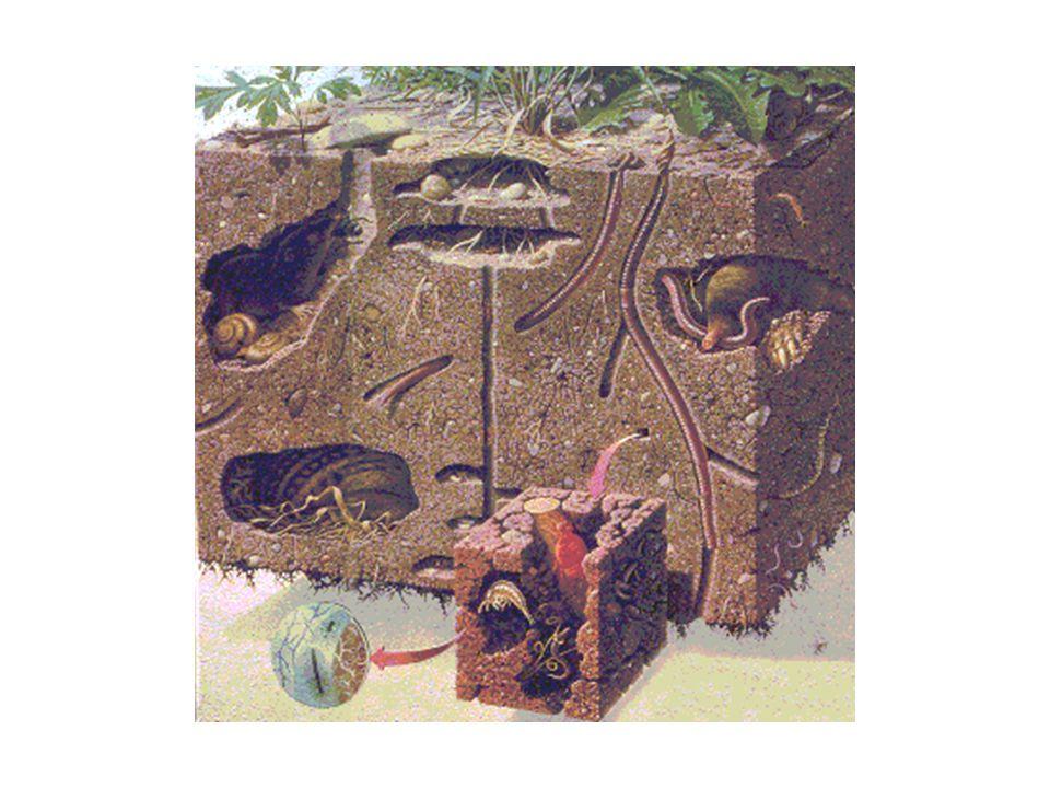 Unabhängig von Tongehalt und –art sorgt die Bodenfauna in fast allen Klimaregionen für Biopedoturbation, also die Durchmischung von Material aus verschiedenen Bodentiefen oder –horizonten.