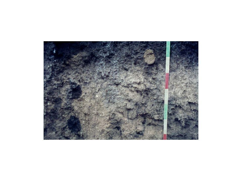 Hinweise auf Biopedoturbation aufgrund der Krotovinen links im Profil: die dunklen Flecken bilden sich wegen der Einwaschung von Material aus dem A-Horizont, die durch Gänge wühlender Tiere ermöglicht wird.