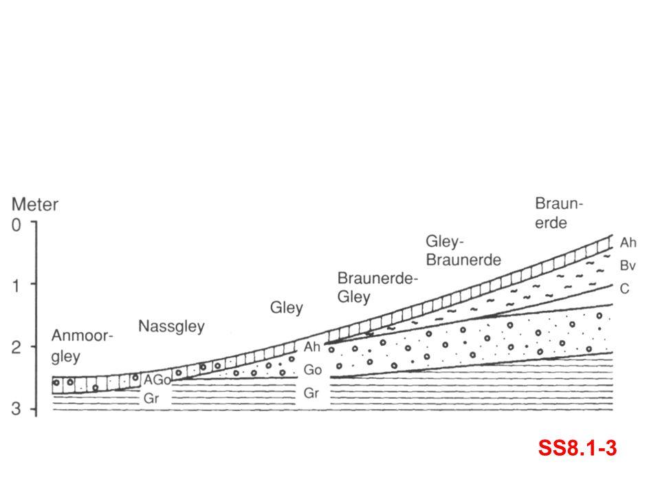 Zur Illustration des bodenbildenden Faktors Relief: mit zunehmender Höhe, also zunehmendem Abstand vom Grundwasser, entstehen verschieden Bodentypen mit ihren typischen Horizontabfolgen. Bei dieser und ähnlichen Idealisierungen wird angenommen, dass alle anderen Umweltfaktoren über die Distanz dieser Toposequenz die gleichen sind.