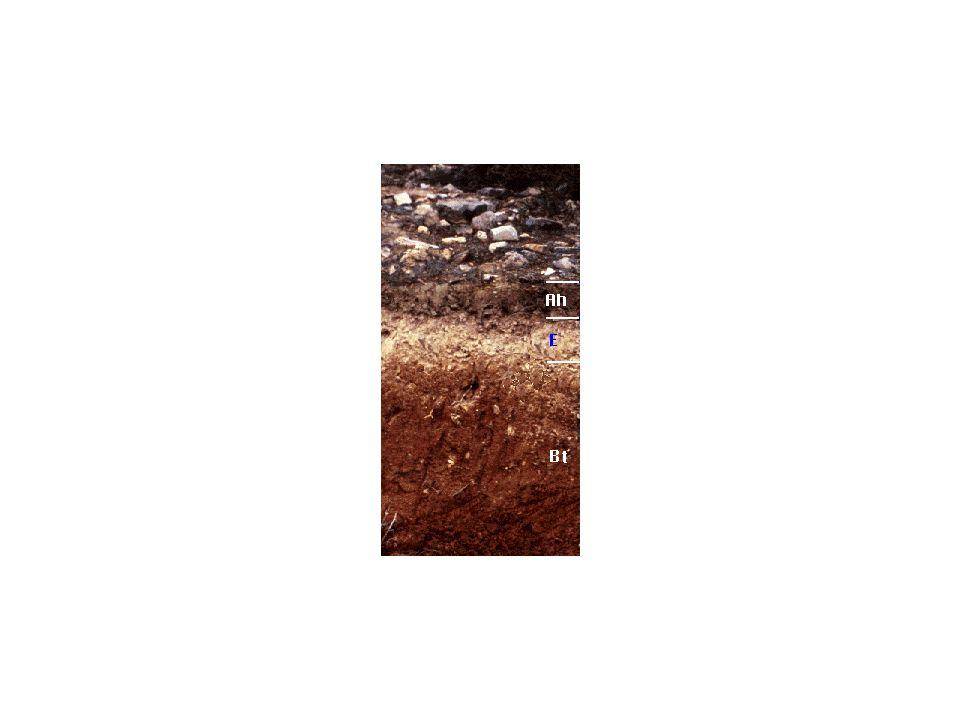 Jedes Bodenprofil zeigt den pedogenetischen Hauptprozess Umformung und Input (nämlich von organischer Substanz und somit letztendlich C aus der Atmosphäre) an, da ohne diese Prozesse Boden im technischen Sinne garnicht existieren würde.