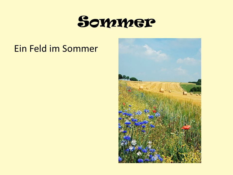 Sommer Ein Feld im Sommer